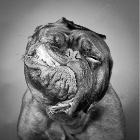 Shake doggie shake! CREDIT: CARLI DAVIDSON