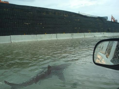 This photograph which made the rounds online, was purported to be of a shark swimming down the street in Puerto Rico after the hurricane hit. It was later revealed as a fake.